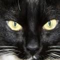День кота от NoorySan