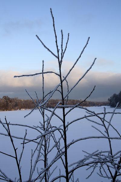 Ледяной-дождь-Малаховка.-©-Фото-Светланы-Доможировой.jpg