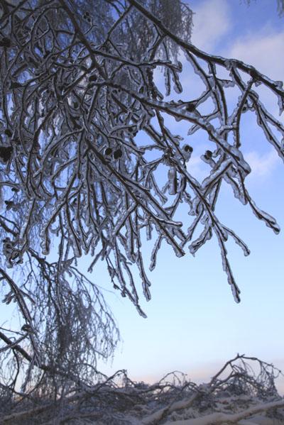 Ледяной-дождь-в-Малаховке-2.-©-Фото-Светланы-Доможировой.jpg