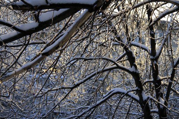 Ледяной дождь в Малаховке 2010 - фото Светланы Доможировой