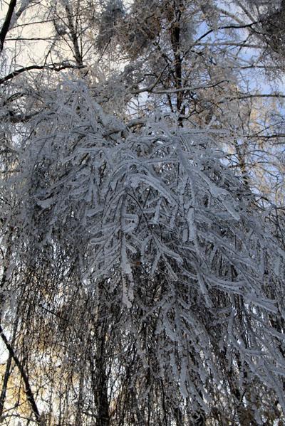 Ледяной дождь в Малаховке 2010 - фото Светланы Доможировой 1