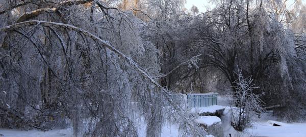 Ледяной дождь на Малаховском озере - фото Светланы Доможировой