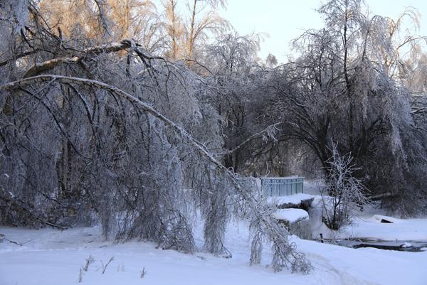 Ледяной дождь в Малаховке