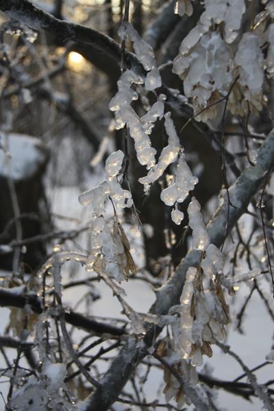 Царство-льда.-©-Фото-Светланы-Доможировой.jpg