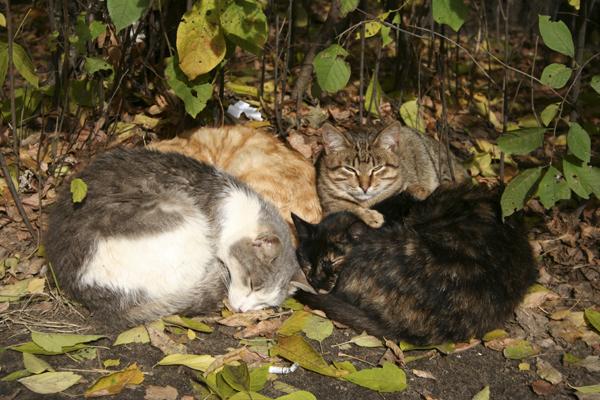 День-кота-Коты-в-осенних-листьях.jpg