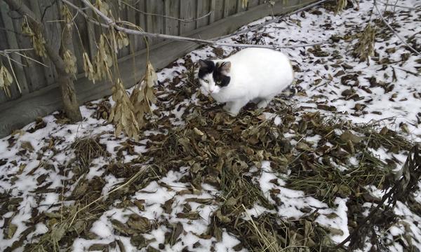 День-кота-чернобелая-кошка-хамелеон.jpg