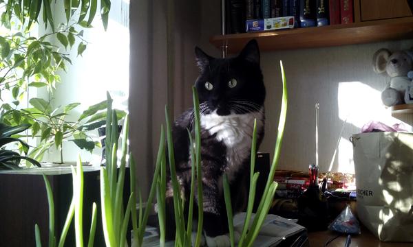 Весенний лук с котиком от NoorySan
