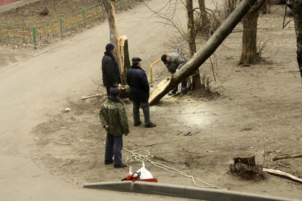 Удаление-сухих-деревьев-в-Малаховке.jpg
