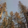 Suhie_eli_v_podmoskov'e