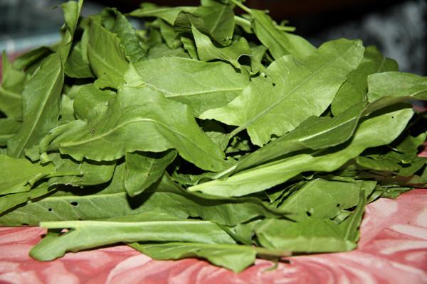 щавель, щи щавельные, щи с капустой и щавелем, зеленые щи из щавеля и капусты