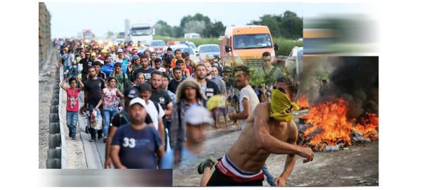 троянский конь по-восточному, боевики под видом мигрантов, беженцы в Европе фото, стокновения мигрантов фото