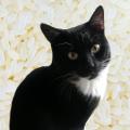 кот рис и колбаса