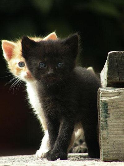 котята сироты