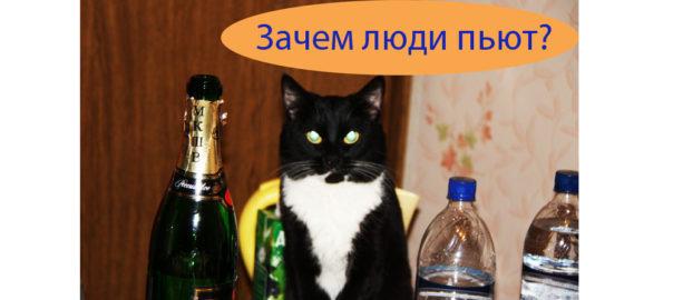 kot-s-butilkoj