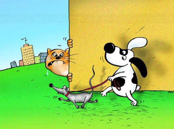 кошка и окрошка